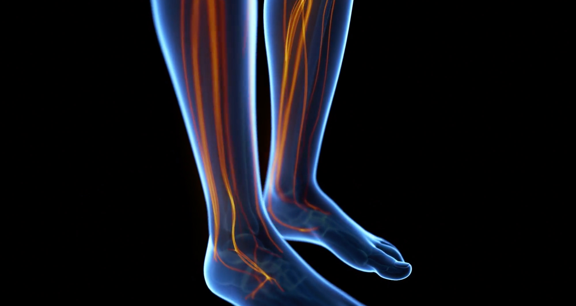 3D rendering of legs with veins